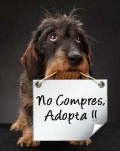 NO-COMPRES-ADOPTA-en-Cuajimalpa-de-Morelos-Mascotas-en-20121001013535