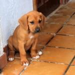 cachorro mami-1 (FILEminimizer)