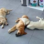 cachorros-1a