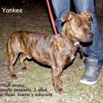 yankee (2)